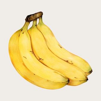 Banan ręcznie rysowane wektor w kolorowym ołówku