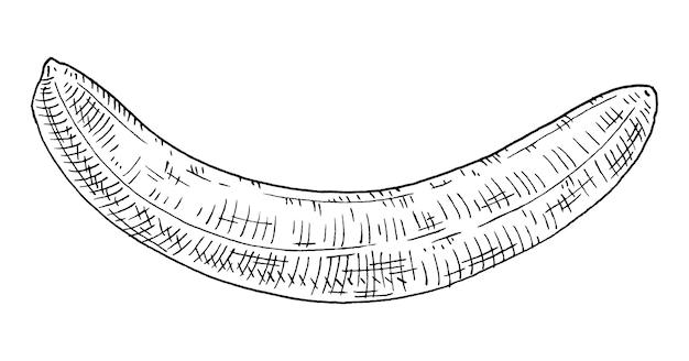 Banan w całości obrany. vintage wektor grawerowanie czarny monochromatyczny