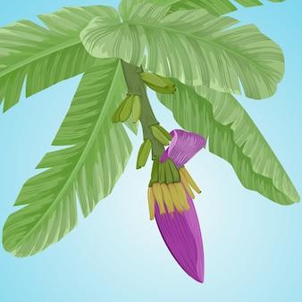 Bananowy kwiat i liście na błękitnego tła wektorowym projekcie.