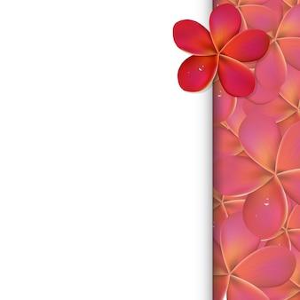 Baner z różowymi kwiatami frangipani, ilustracji