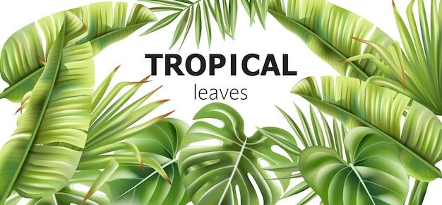 Baner zielonych liści tropikalnych z miejscem na tekst