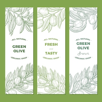 Banery gałązki oliwne
