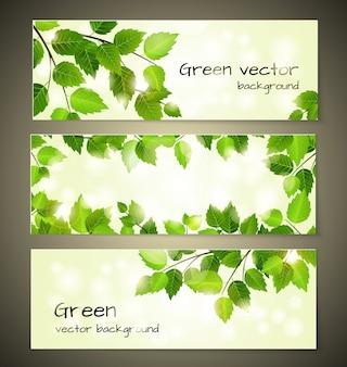 Banery zielonych liści zestaw szablonów wektorów projektu