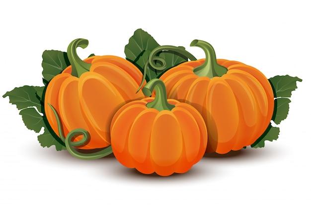 Banie z liśćmi na białym tle. ilustracja dojrzałe pomarańczowe dynia - squash na halloween, jesienne dożynki lub święto dziękczynienia. warzywa przyjazne dla środowiska.