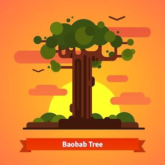 Baobab drzewa wieczorem sceny słońca