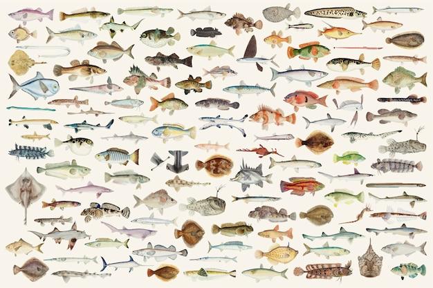 Barwiona wektorowa ilustracja rybia rysunkowa kolekcja