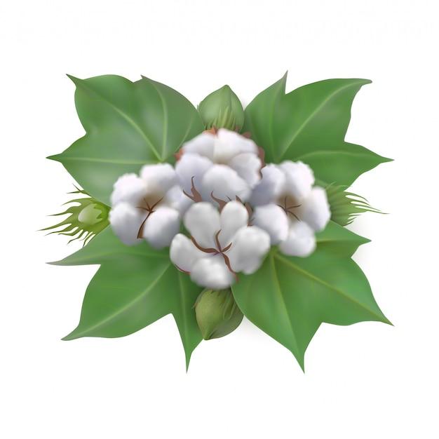 Bawełna liście, pąki i uformowane bawełniane pudełka na białym tle.