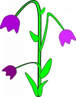 Bell-kwiat