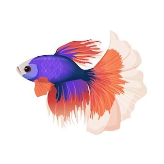 Betta małe kolorowe, słodkowodne ryby rayfinned realistyczna ilustracja