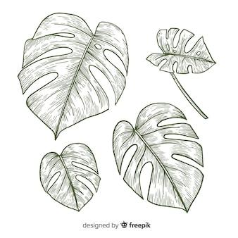 Bezbarwne opakowanie z liśćmi monstera