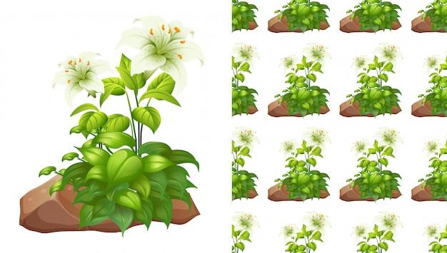 Bezszwowe biała lilia kwiaty i skały