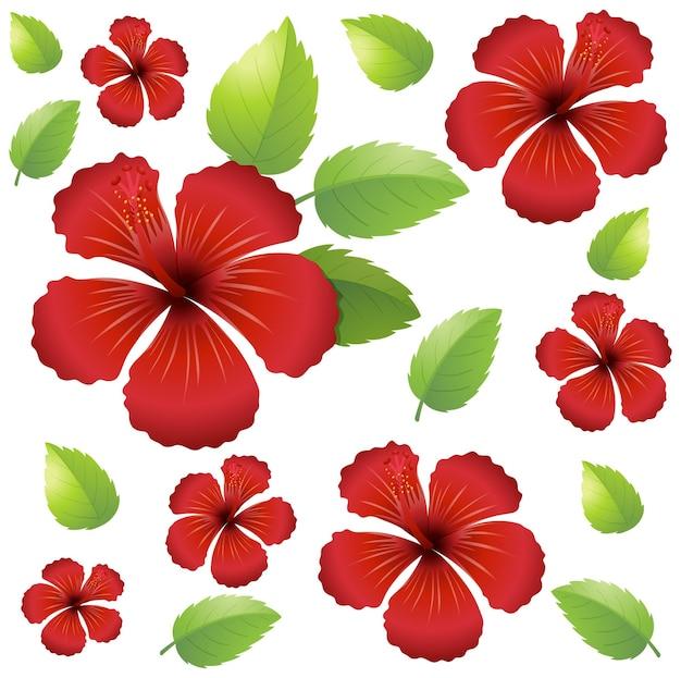 Bezszwowe tło z czerwonymi kwiatami hibiskusa