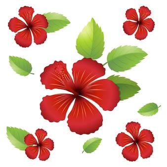 Bezszwowy wzór tła z kwiatami hibiskusa