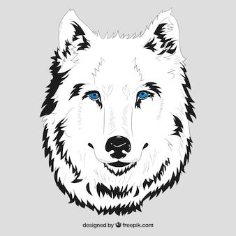 Biała głowa wilka z niebieskimi oczami