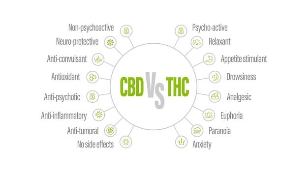 Biała infografika z porównaniem cbd i thc. cbd vs thc, lista różnic z ikonami