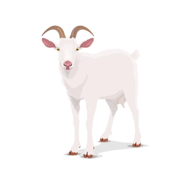 Biała koza, kreskówka wektor zwierzę