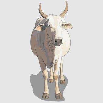 Biała krowa portret ręcznie rysowane ilustracje i wektory