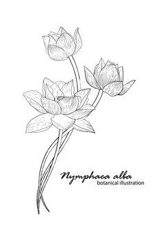 Biała lilia, kompozycja kwiatowa. ilustracja botaniczna