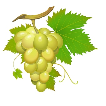 Białe grono winogron z zielonymi liśćmi na białym tle