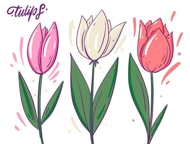 Białe i różowe tulipany. styl kreskówki z konturem. odosobniony.