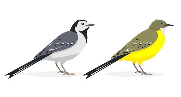 Białe i żółte rysunki ptaków pliszka na białym tle.