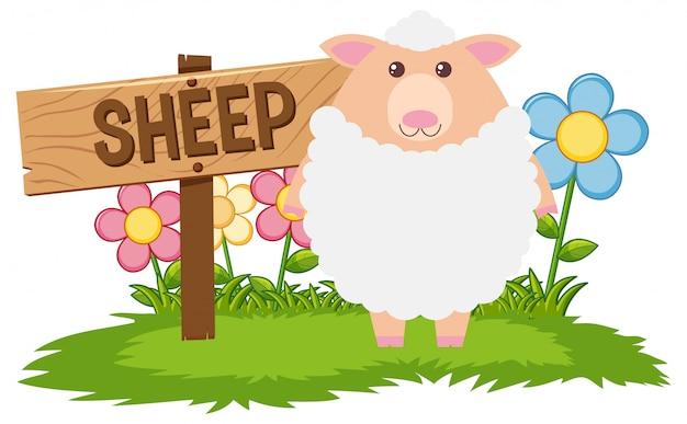 Białe owce na farmie