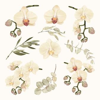 Białe storczyki boho z liśćmi eukaliptusa