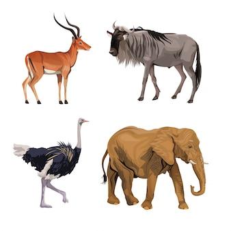 Białe tło z realistycznymi kolorowymi dzikimi afrykańskimi zwierzętami