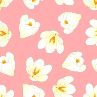 Biały krokus kwiat na jasnym tle różowy.
