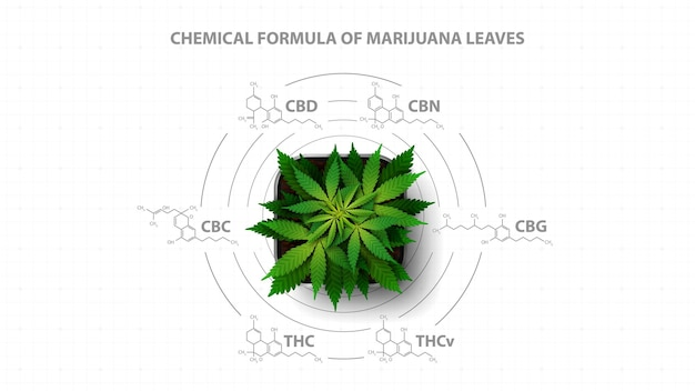 Biały plakat z wzorami chemicznymi naturalnych kannabinoidów