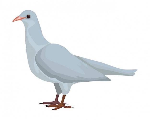 Biały ptak gołąb