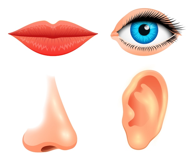 Biologia człowieka, narządy zmysłów, ilustracja anatomii. szczegółowy pocałunek lub usta, nos i ucho, oko lub widok. ustawić nauk medycznych lub zdrowego człowieka. wzrok, słuch, smak, zapach, dotyk, spojrzenie, europa.