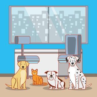 Biuro weterynaryjne ze zwierzętami