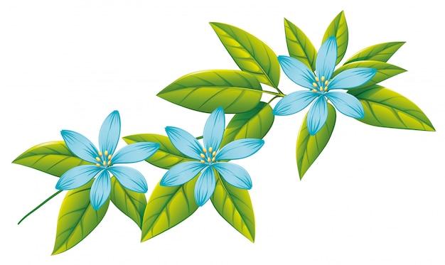 Błękitów kwiaty i zieleń liście na bielu