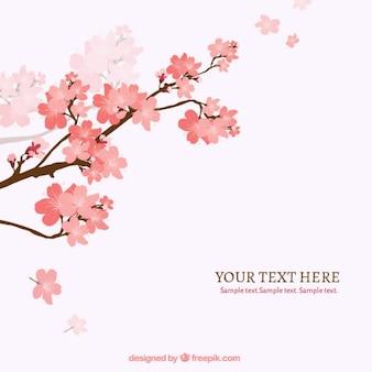 Blooming wiśniowe drzewo, gałąź, tło