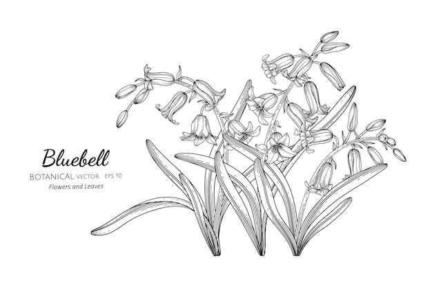 Bluebell kwiat i liść ręcznie rysowane ilustracja botaniczna z grafiką.
