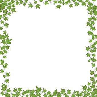 Bluszcz winorośli z zielonymi liśćmi. kwiatowy prostokątna ramka na białym tle