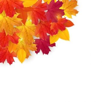 Błyszczące jesienne liście naturalnego tła