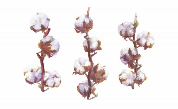 Bolls bawełniane wektor akwarela gałąź i wieniec malarstwo. handdrawn zestaw botaniczny