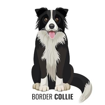 Border collie zwierzę siedzi na białym tle na białym z jego nazwą poniżej ilustracji wektorowych. duży domowy realistyczny pies z otwartymi ustami