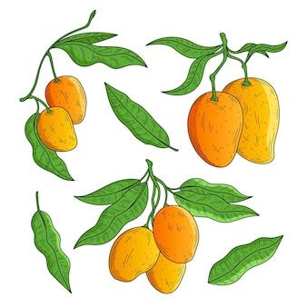 Botaniczne drzewo mango