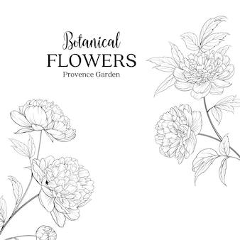 Botaniczne ręcznie rysowane kwiaty