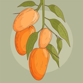 Botaniczny widok z przodu drzewa mango