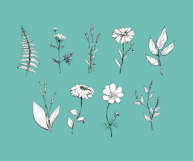 Botanika. zestaw. vintage kwiaty. czarno-biała ilustracja w stylu rycin.