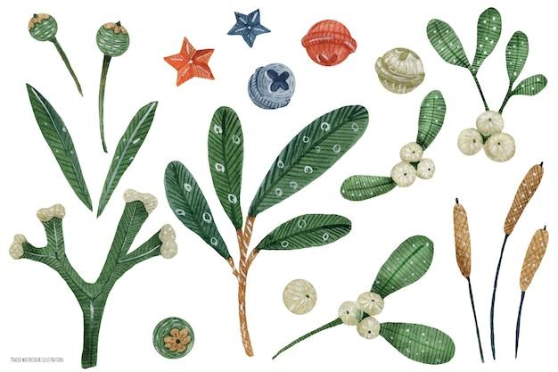 Boże narodzenie nakreśliło akwarele dzwonki i rośliny. jemioła, sosna i trzcina