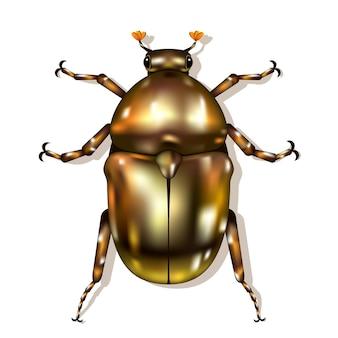 Brązowy chrząszcz na białym tle