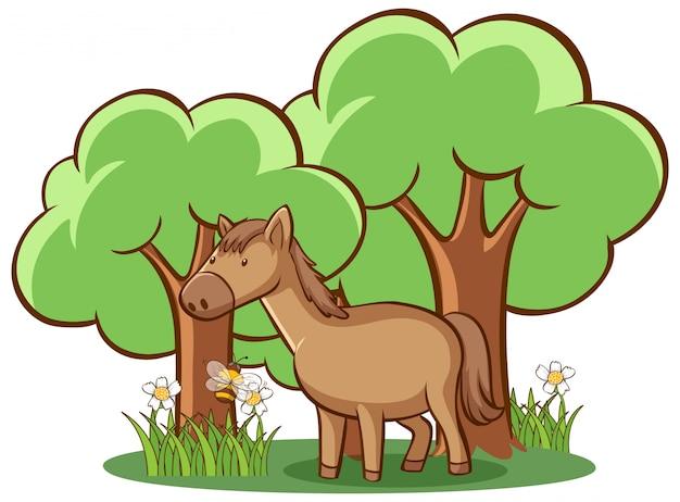 Brązowy koń na białym tle