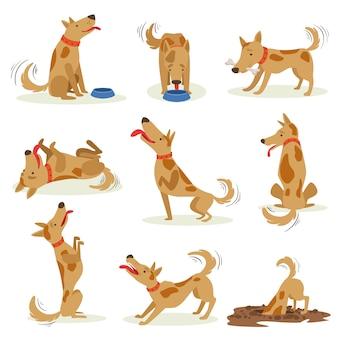 Brązowy pies zestaw normalnych codziennych czynności