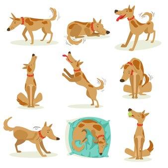 Brązowy pies zestaw normalnych działań