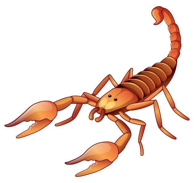 Brązowy skorpion